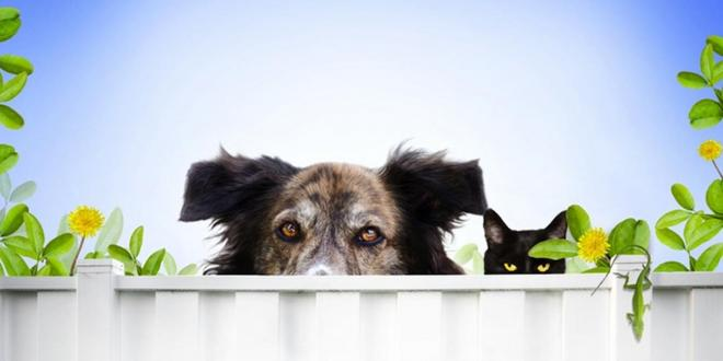 Chiropractic care for pets