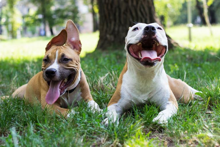 two happy dogs in the park